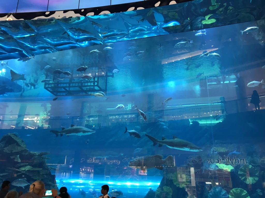 Аквариум с огромными рыбами
