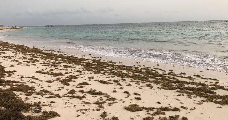 Вородосли на пляжах Пунта-Каны