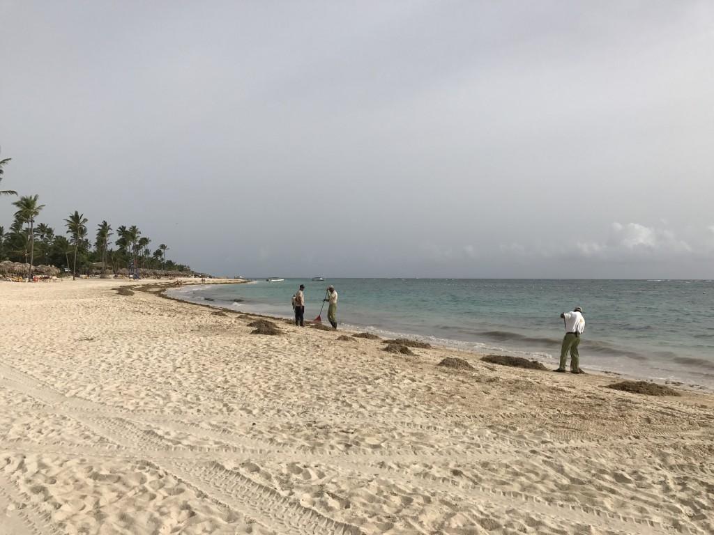 Водоросли складывают в кучки и вывозят с пляжа