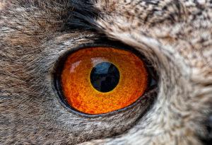 Тест: Угадайте животных по глазу