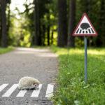 Подборка из самых необычных дорожных знаков во всём мире