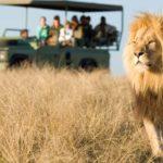 Необычные 10 вещей, которые можно встретить только в Африке