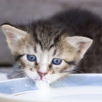 Правильный уход за котятами в домашних условиях в первые 1-2 месяца, что делать