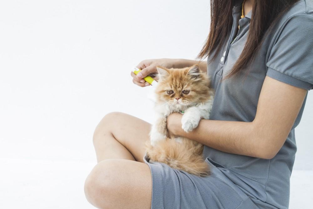 Аллергия на шерсть кошек симптомы