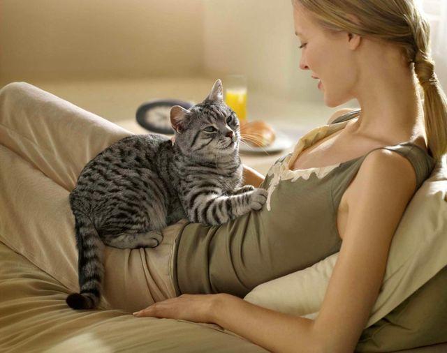 Есть ли глисты у кота как определить гельминтоз