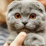 Сфинкс кошка: фото которыми восторгаются и ужасаются