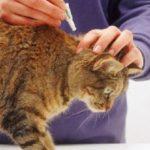 Эффективное и безопасное средство — капли от блох для кошек