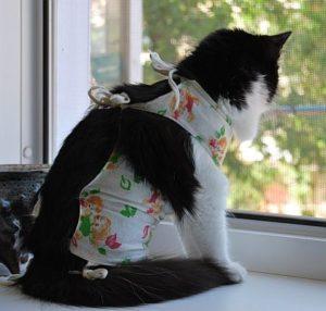 Кошка после стерилизации. Что нужно знать владельцу после стерилизации кошки.