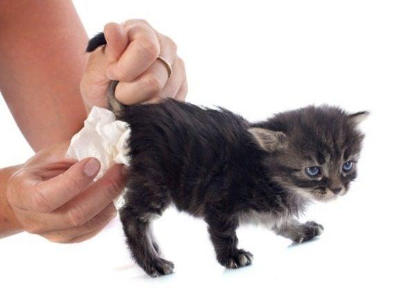 Причины поноса у кошки