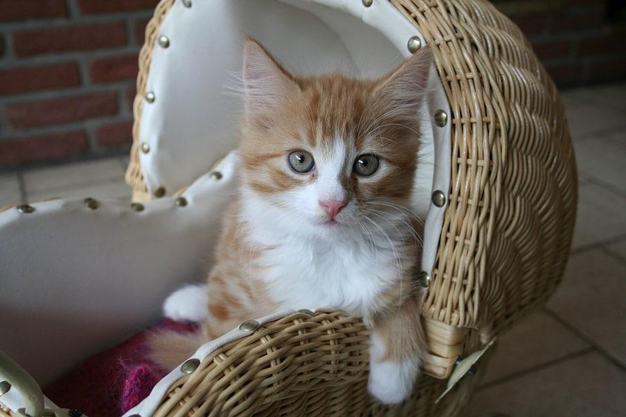 Как назвать кошку: популярные имена