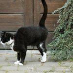 Кастрация кота (Стерилизация): Плюсы и минусы, цены