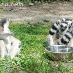 5 причин посетить зоопарк будапешта + цены, отзывы и фото