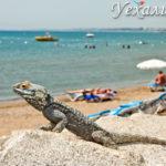 Главные пляжи сиде: привет, турецкая анапа! обзор + фото и отзывы