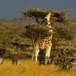 Кения – динамично развивающаяся республика