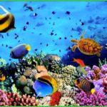 Красное море– карта, климат, вода и фауна красного моря