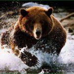 Медведи камчатки – поездка в ноябре в гости к хозяевам камчатки