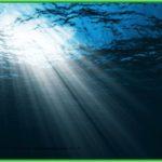 Мировой океан. интересные факты – это нужно знать