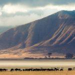 Парк нгоронгоро – танзанийский заповедник нгоронгоро