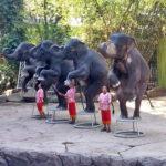 Прекрасная экскурсия в сафари парк в бангкоке: наши отзывы и фото