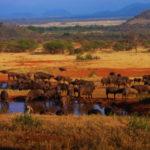 Серенгети – национальный парк танзании описание серенгети