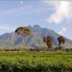Вирунга- история создания описание флора фауна парка вирунга