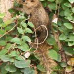Животные тайланда, которых можно увидеть на каждом шагу