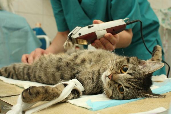 Анализ крови у кошек: общие сведения и расшифровка результатов